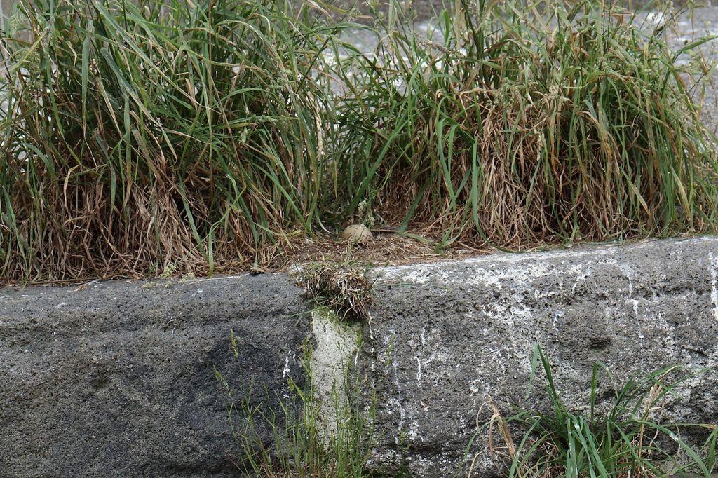 20160624_北海道_104.JPG