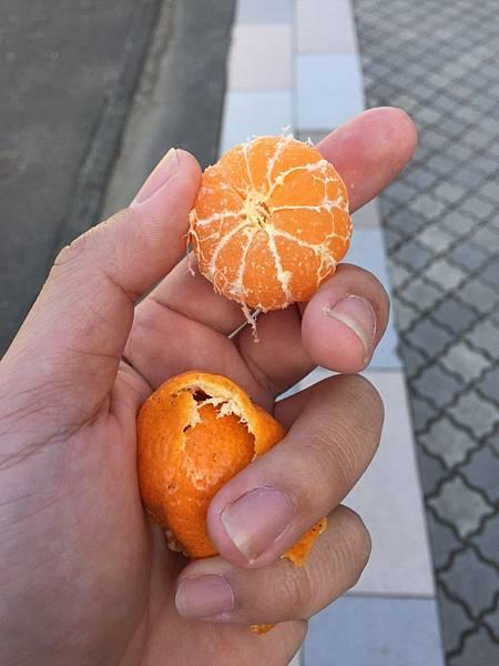 20170130_南九州_114.jpg