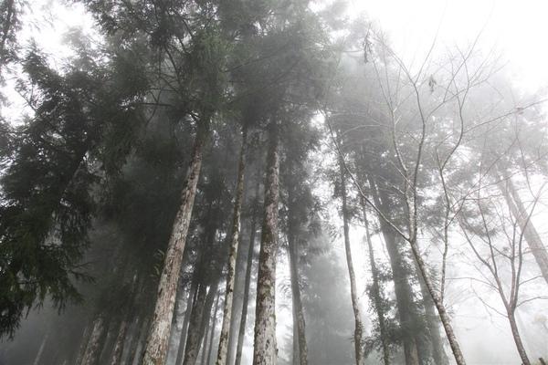 20100101_明池_063.JPG