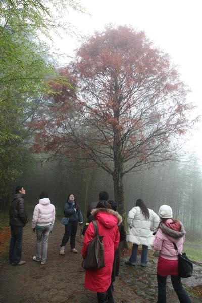 20100101_明池_072.JPG