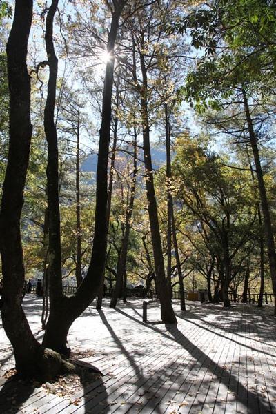 20101213_台中南投_042.JPG