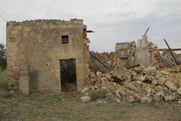2011橄欖採收01.jpg