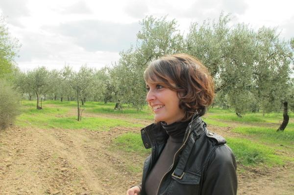 2011橄欖採收05.jpg