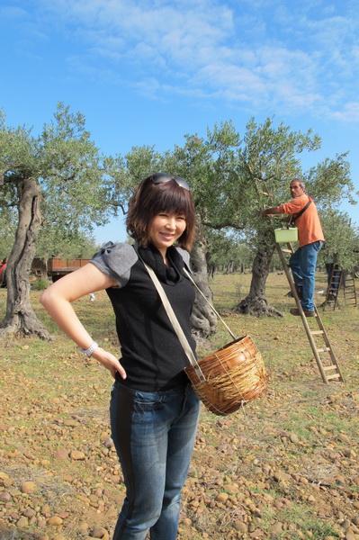 2011橄欖採收12.jpg