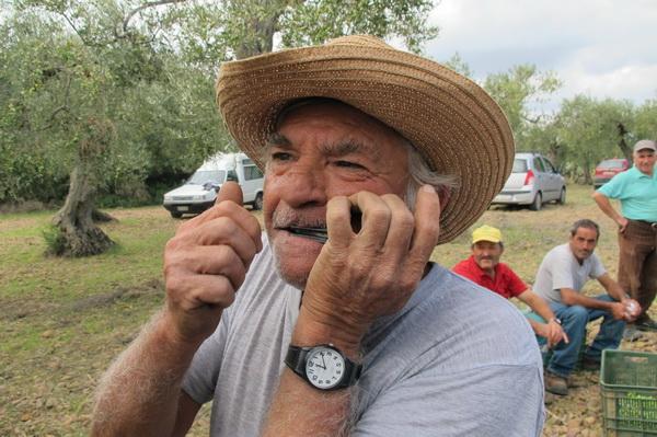 2011橄欖採收17.jpg