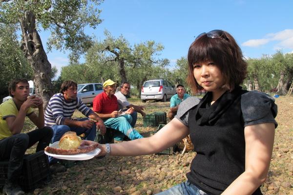 2011橄欖採收18.jpg