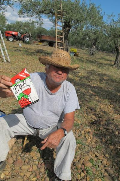 2011橄欖採收21.jpg