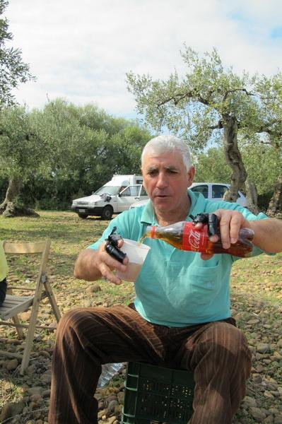 2011橄欖採收23.jpg