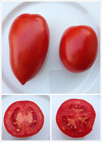 ORO番茄採收之旅15.png
