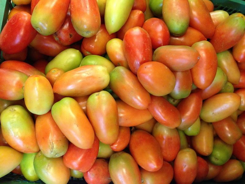 ORO番茄採收之旅20.jpg