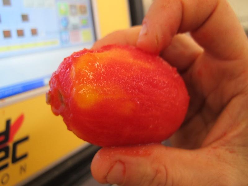 ORO番茄採收之旅21.jpg
