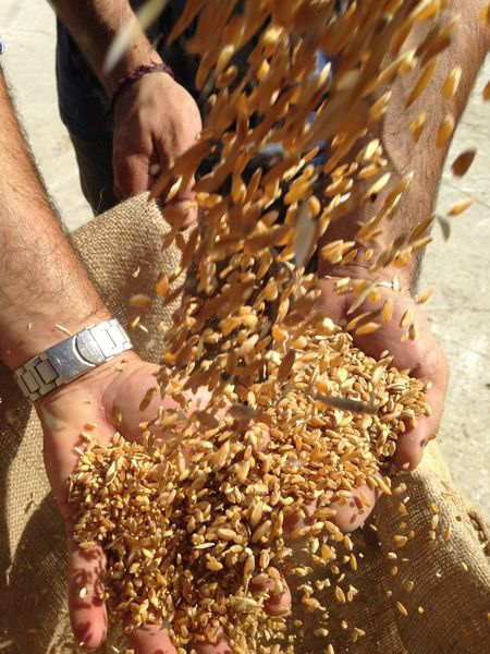 堅持古老技法的「杜蘭小麥」研磨坊