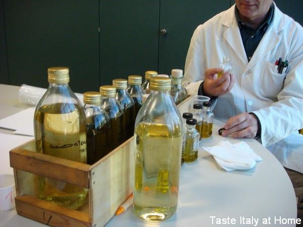 橄欖油_專業名詞_01.jpg