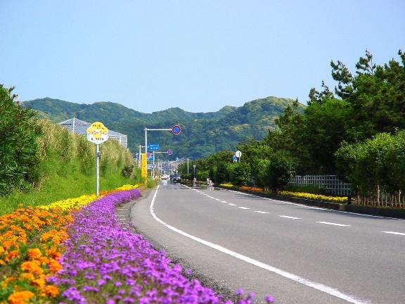 花海道路1.jpg