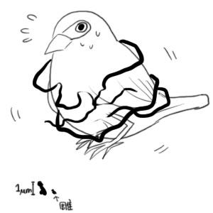 基巴毛捲過鳥 微米屌大過雕