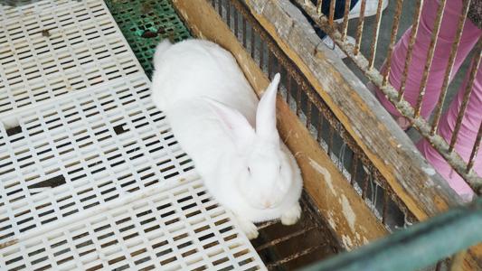 肥兔子.jpg