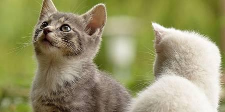 cat-2273598_1280.jpg