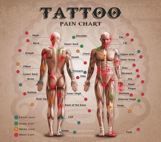 ★ 刺青部位痛感區分圖