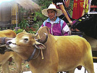 ChiangRai_006c.jpg
