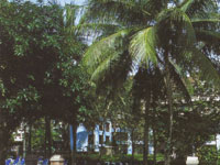 Phuket_018c.jpg