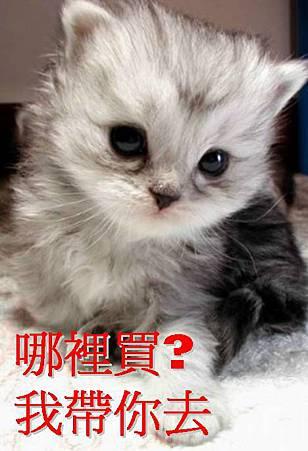 小 貓3.jpg