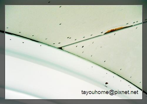 餐廳天花板整修特寫1.jpg