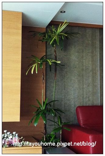 棕竹1.jpg