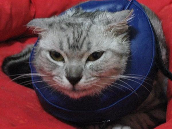 Taza結紮後又被我滴耳藥的臉