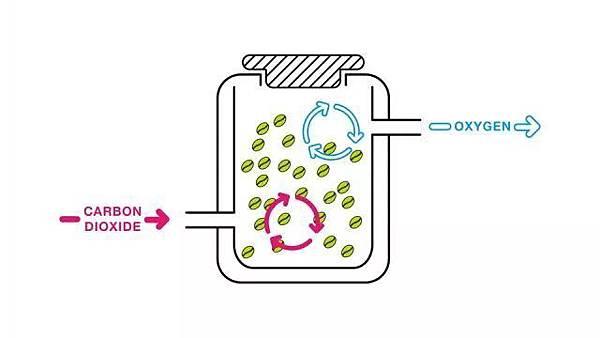 厭氧發酵處理法