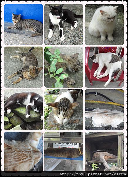 各式各樣的貓咪仔