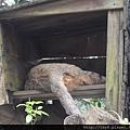 猴硐喵村25