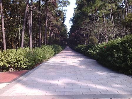 中山紀念林21