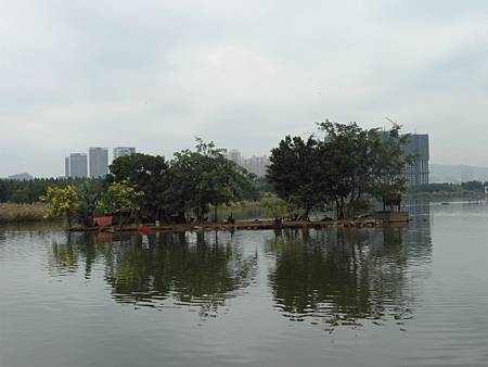 五緣灣濕地公園12