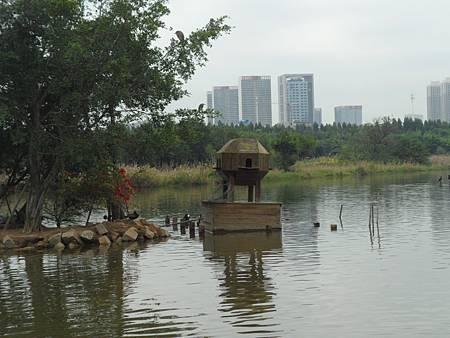 五緣灣濕地公園09
