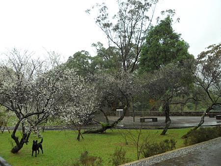 角板山公園12
