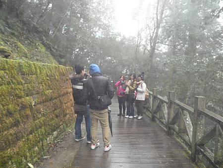 拉拉山神木群06