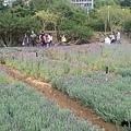 內雙溪自然公園(005) .jpg