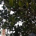 康佳旅行社員工旅遊(019) .jpg