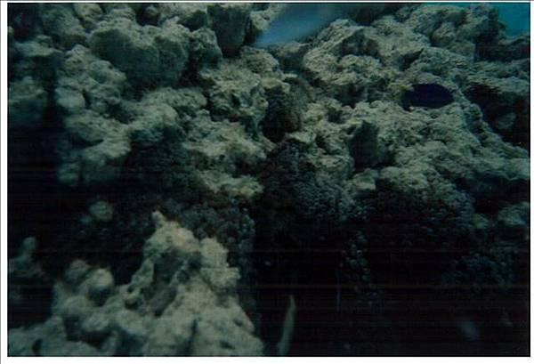 海葵跟小丑魚