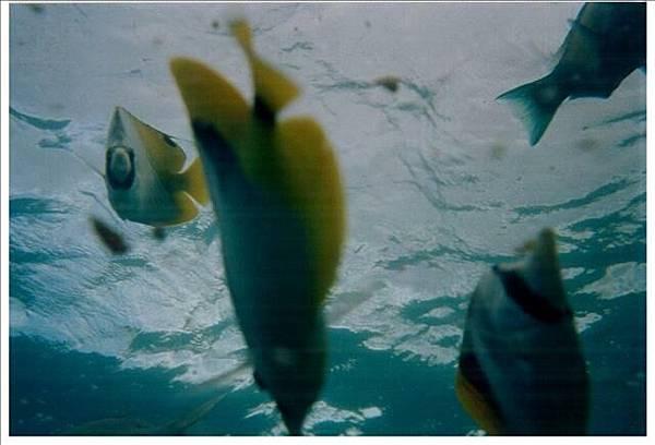 魚兒在看我