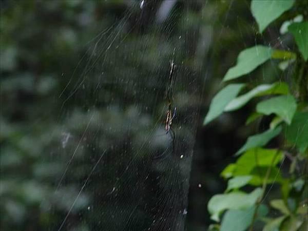 路邊的蜘蛛