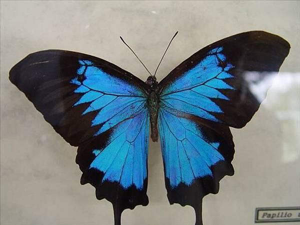 蝴蝶谷就是要看蝴蝶啦