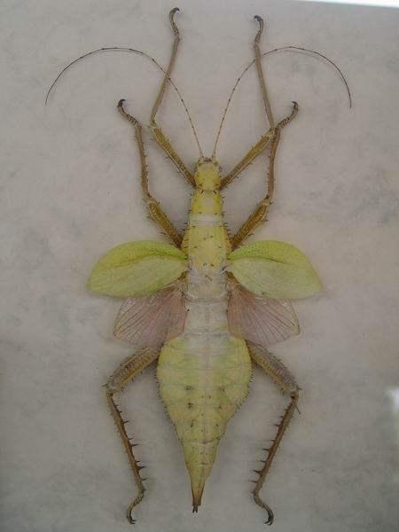 這些蟲的名字都很奇怪