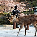 奈良18.jpg