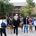 奈良19.jpg