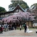 奈良28.jpg