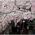 奈良29.jpg