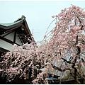 奈良36.jpg