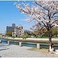 廣島櫻2.jpg