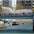 廣島櫻3.jpg